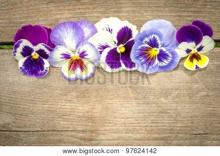 Heartsease Flowers In A Row On The Wooden Table With Copy Space