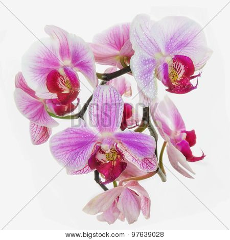 Blooming Neon Orchids