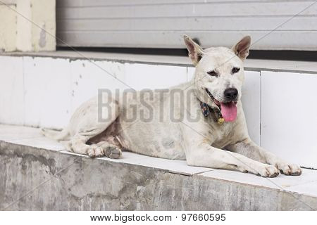 Homeless dog abandoned on the streets