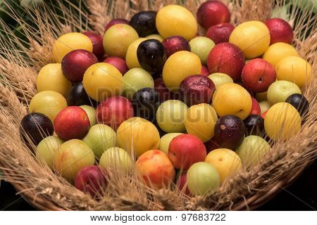 Cherry Plums In A Wooden Basket