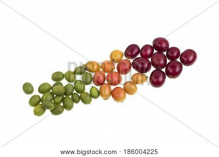 From green to red three degrees of ripeness of coffee beans isolated on a white background