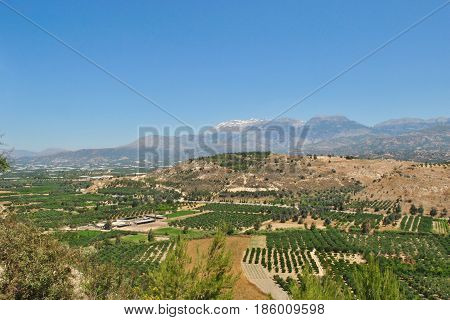 Agriculture and Olive Groves in Greece in Crete