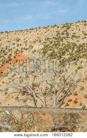 Beautiful bare trees along railroad tracks with bits of orange and green in the background