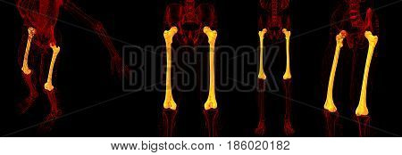 3D Rendering Medical Illustration Of The Femur Bone