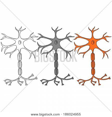 Nerve Cell Neuron neuron in sketch style in color. isolated on white background. Ink hand drawn illustration. Set.