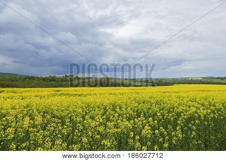 Agricultural Fields And Dramatic Cloudy Sky