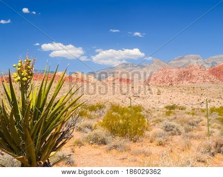 Spiky leaves of yucca tree and famous striped hills in distance under slear blue sky surrounding Red Rock Desert