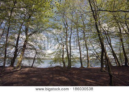 Springtime Danish beech forest lose to Littlebelt and bridge in Denmark