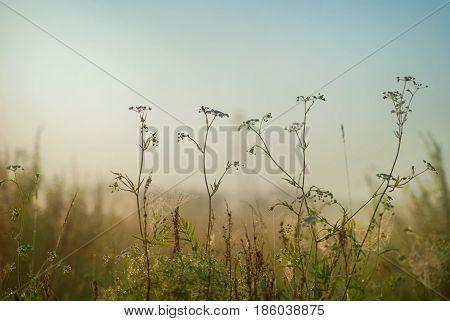 Stems hemlock against the sky and meadows.