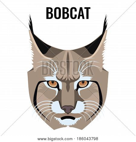 Portrait of bobcat vector illustration isolated on white. Cat specie with barred and spotted coat. Closeup of wild animal