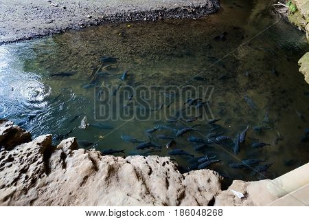 Cave Pond Full Of Fishes