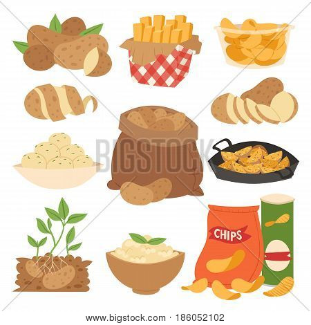 Vector illustration vegetable potato products sliced ripe food boiled stewed steamed fries raw chips home baked. Eat natural agriculture nutrition organic cooking fresh meal ingredient.