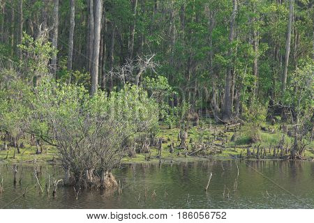 Okefenokee Swamp located in St. George Georgia