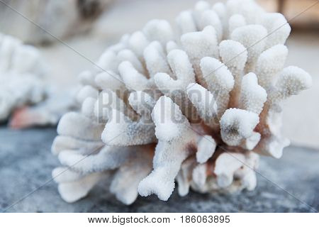invertebrate, wildlife and nature - hard stony coral