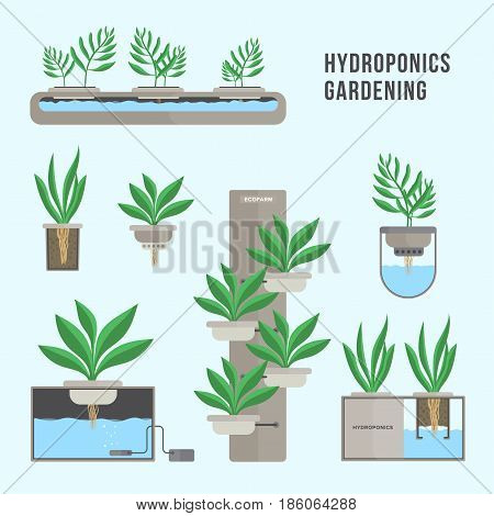 Hydroponic system, gardening technology. Collection of different plants in flat style