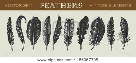 Vector illustrated set of 10 vintage feathers