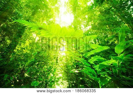 Incredible tropical dense forest view with sun flare in morning.