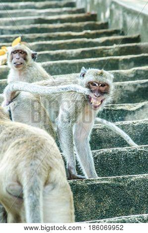 Cheshire Monkey.Cheshire Monkey.Cheshire Monkey.Cheshire Monkey.Cheshire Monkey.Cheshire Monkey.