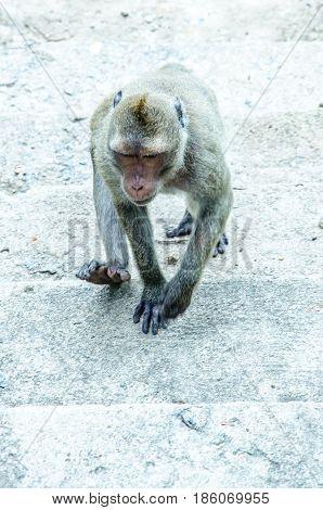 Monkey is walkingMonkey is walkingMonkey is walkingMonkey is walking