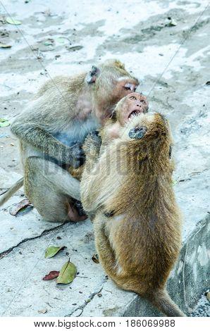 Monkey play.Monkey play.Monkey play.Monkey play.Monkey play.Monkey play.Monkey play.