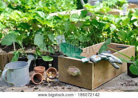gardening tools on a box with seeds on a plank among vegetable plants