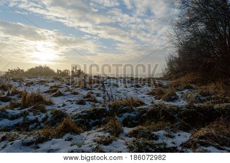 Melting snow on brown grass plants with the sun rising over plants in the back on a cold winter morning