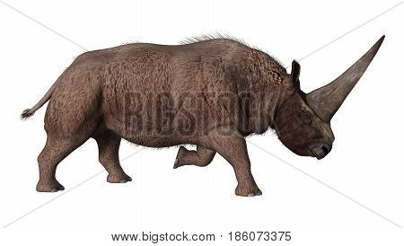 3D Rendering Elasmotherium On White