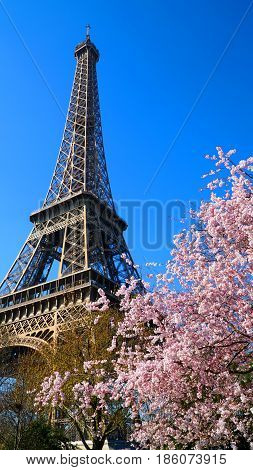 Eiffel Tower in spring time Paris France