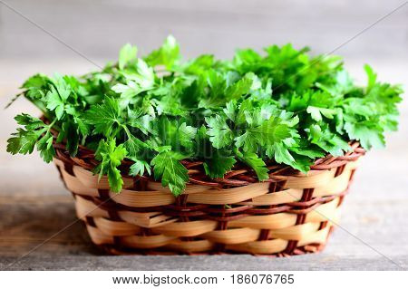 Fresh green parsley sprigs in a wicker basket. Garden parsley photo. Source of flavonoid and antioxidants, folic acid, vitamin K, vitamin C and vitamin A. Rustic style. Closeup