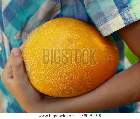 Kid Hand Hold Ripe Yellow Melon Close Up