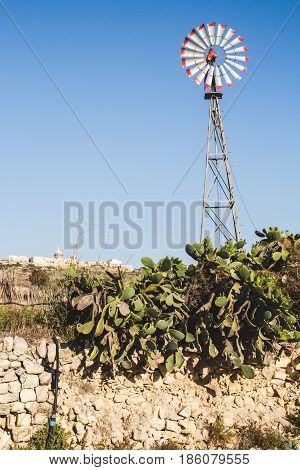 Windmill and prickly pear plant pictured in a typical countryside scene. Malta Gozo Europe.