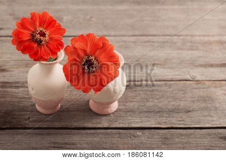 the red zinnia flower in a vase