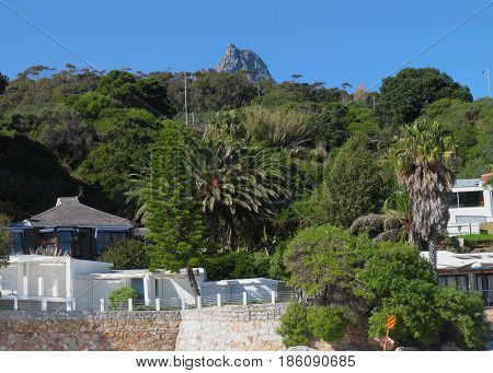 FROM CLIFTON, CAPE TOWN, SOUTH AFRICA, LANDSCAPE, WITH HOUSES TREES AND OTHER VEGETATION IN THE FORE GROUND AND THE TOP OF TABLE MOUNTAIN IN THE BACK GROUND