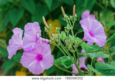 background nature Flower. Garden flowers. Bouquet Purple