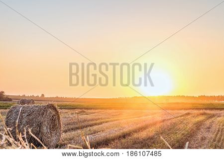 Wheat field after harvest with straw bale in light of the low evening sun backlight. Hay rolls on the sunset. Limited depth of field.