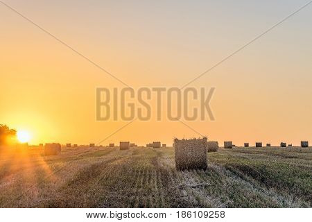 Wheat field after harvest with straw bale in light of the low evening sun backlight. Hay rolls on the sunset.