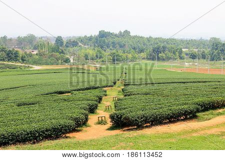 Water system in tea plantations, Water valve in tea plantations