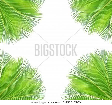 Green coconut leaf isolated on whie background