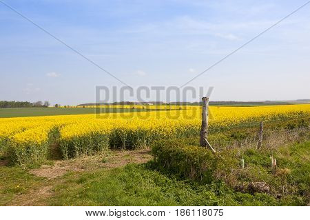 Wheat And Oilseed Rape Crops