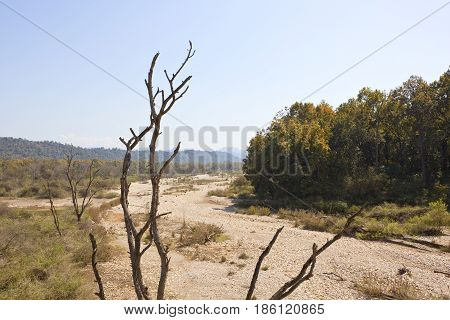 Dead Tree And Dry River Bed