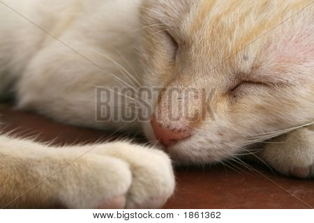 Beautiful White Cat Sleepping Under The Sun