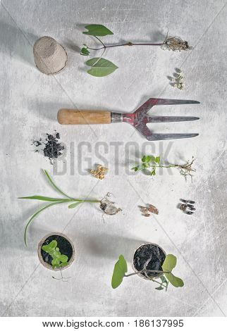 Flat Layed Seedlings Seeds Pots and Vintage Hand Fork on White Scratchy Background
