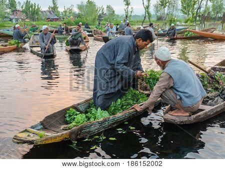Srinagar India - 25 April 2017 : Kashmiri man transfering vegetables from his shikara boat Dal Lake early morning floating market