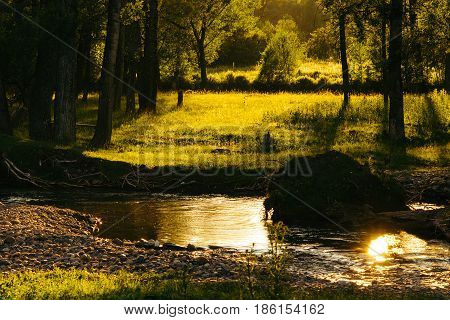 Warm rain. Magic image of the river and forest. The rays of the sun through the trees.