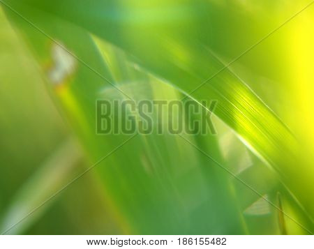 Extreme close up view of grass background abstract