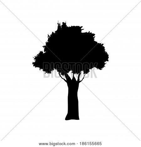 tree foliage trunk branch image vector illustration