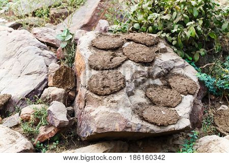 Dung Cakes India