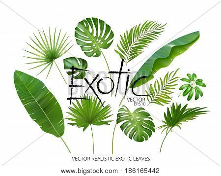 Vector tropical exotic leaves, realistic jungle leaves set isolated on white background. Palm leaf collection. Quality watercolor imitation. Not trace