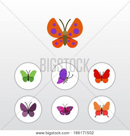 Flat Moth Set Of Monarch, Violet Wing, Danaus Plexippus And Other Vector Objects. Also Includes Insect, Milkweed, Summer Elements.