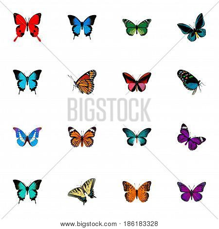 Realistic Papilio Ulysses, Hairstreak, Demophoon And Other Vector Elements. Set Of Butterfly Realistic Symbols Also Includes Fly, Orange, Morpho Objects.